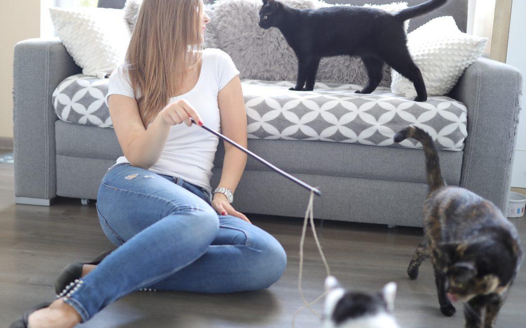 8 sposobów na wzbogacenie życia kota w domu